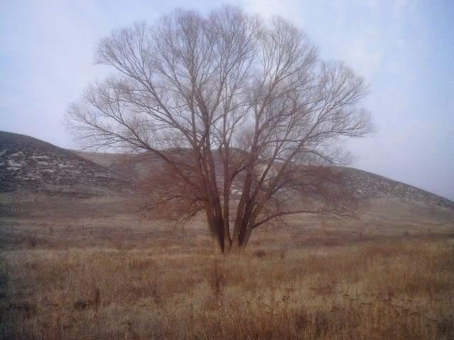 краматорск дерево