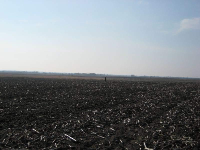 клад распаханное поле днепропетровская область