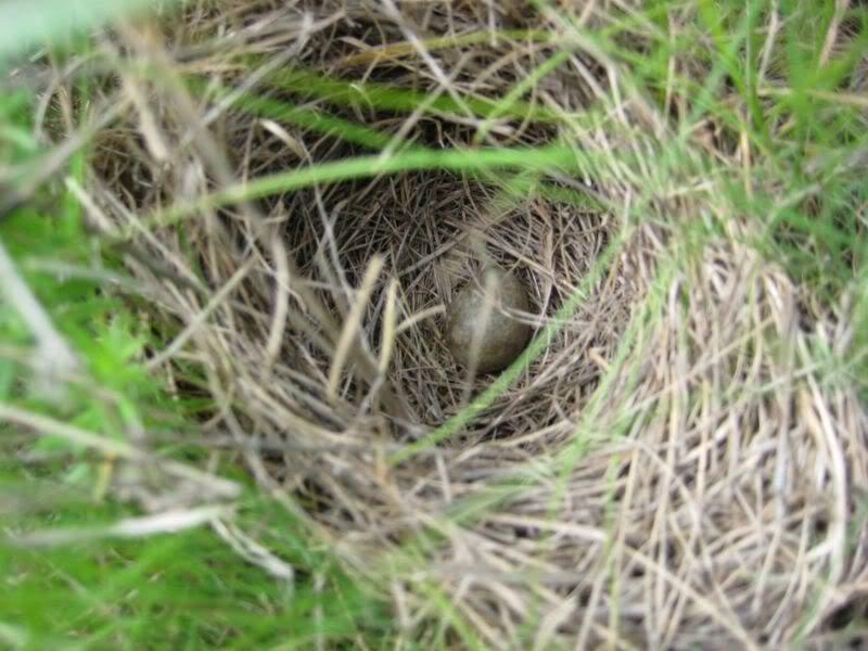 яички в гнезде