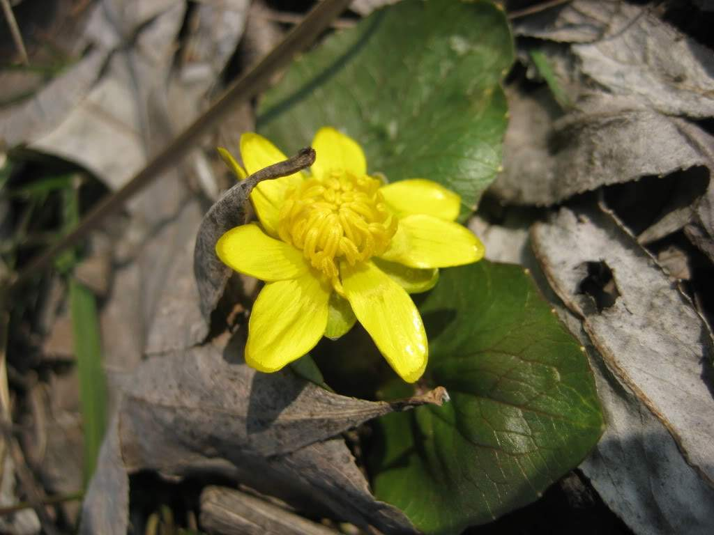 кладовый цветок