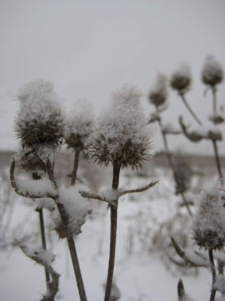репях зима